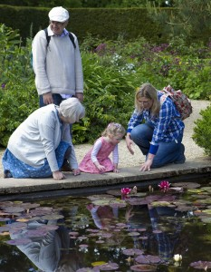 lilly-pond-805207_1280